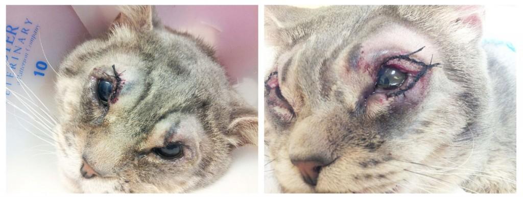 Chubs' surgery