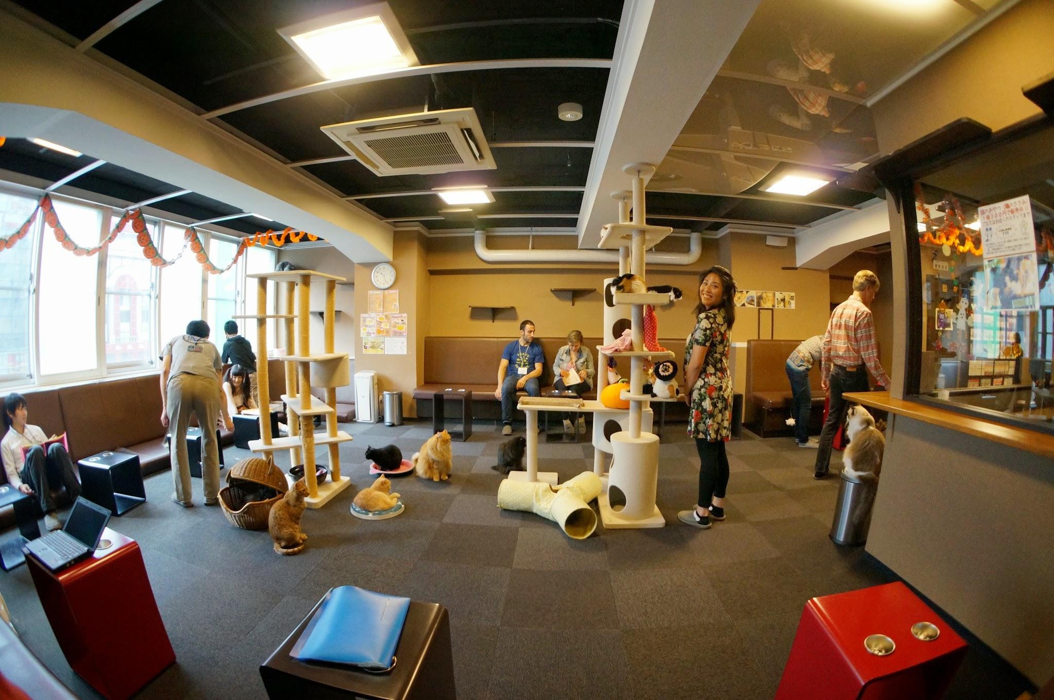 Pet Shop Tokyo For $10k at a Pet Shop
